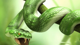 3D Snake Animals Wallpapers HD Widescreen