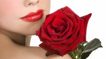 Nice Red Rose Flower Image All Flowers Send Flowers Comments