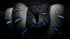 Amazing HD Wallpaper Of Black Snake Gallery
