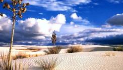Amazing desert photo