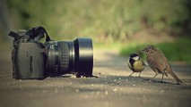 Camera and birds funny picture