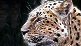 Leopard Animal Wallpaper