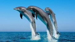 Cute Animal Dolphins