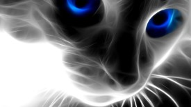 Cat Eyes abstract photo