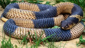 Beautiful Colored Snake Wallpaper HD Widescreen