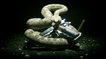Snake HD Wallpaper Snake Photo Gallery