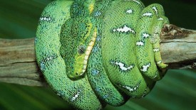 Amazing Snake Wallpapers Images And Animals Snake Pictures