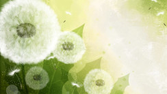 Vector Art White Flowers 3D Wallpapers Free Download
