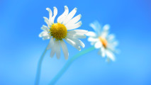 3D Flower Windows 8 HD Wallpapers For Your PC Desktop