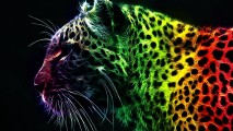 Abstract Cheetah Animal Picture HD Wallpaper Free Download