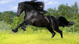 Beautiful Black Horse Run Photos HD Wallpapers Gallery