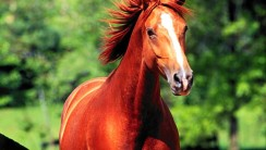 My Favorite Animal They Are Horses Picture Photo Image