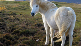 Beautiful White Horse Photo Image Gallery Free Download