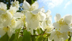 Wonderful Pictures Of Flowers Free Download For Desktop