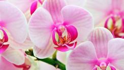 Pink Orchid Flowers Photo Picture Wallpaper Fanpop Fanclubs
