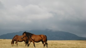 High Resolution Pictures Horses Ss A Free To Download