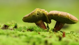 Mushrooms Macro Photography Wallpaper HD Widescreen Desktop