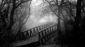 Beautiful Black And White Nature Picture HD Wallpaper Image