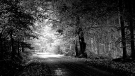 Road Nature Black And White HD Wallpapers For Your PC Desktop