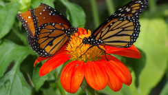 Butterflys Animal With Orange Flower Photo Picture Image HD Wallpaper