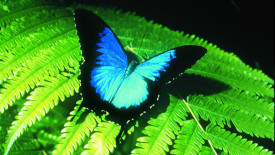 Awesome Australian Butterfly Sanctuary Photos Pictures Gallery