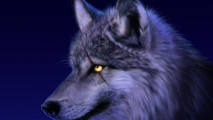 Amazing Wolf Eye Animal Picture Wallpaper HD Widescreen