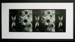 Flower Prints Framed Art Black And White High Quality In HD Wallpaper
