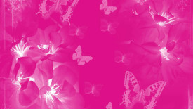 Awesome Pink Butterfly Wallpaper Background Free Download