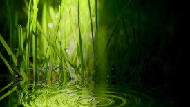 Green Water Nature Full HD Wallpaper Picture Free Download