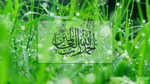 Islamic Gress Grass Photo Picture Image For Your PC Desktop