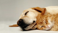 Sleeping Cat with Sleeping Dog