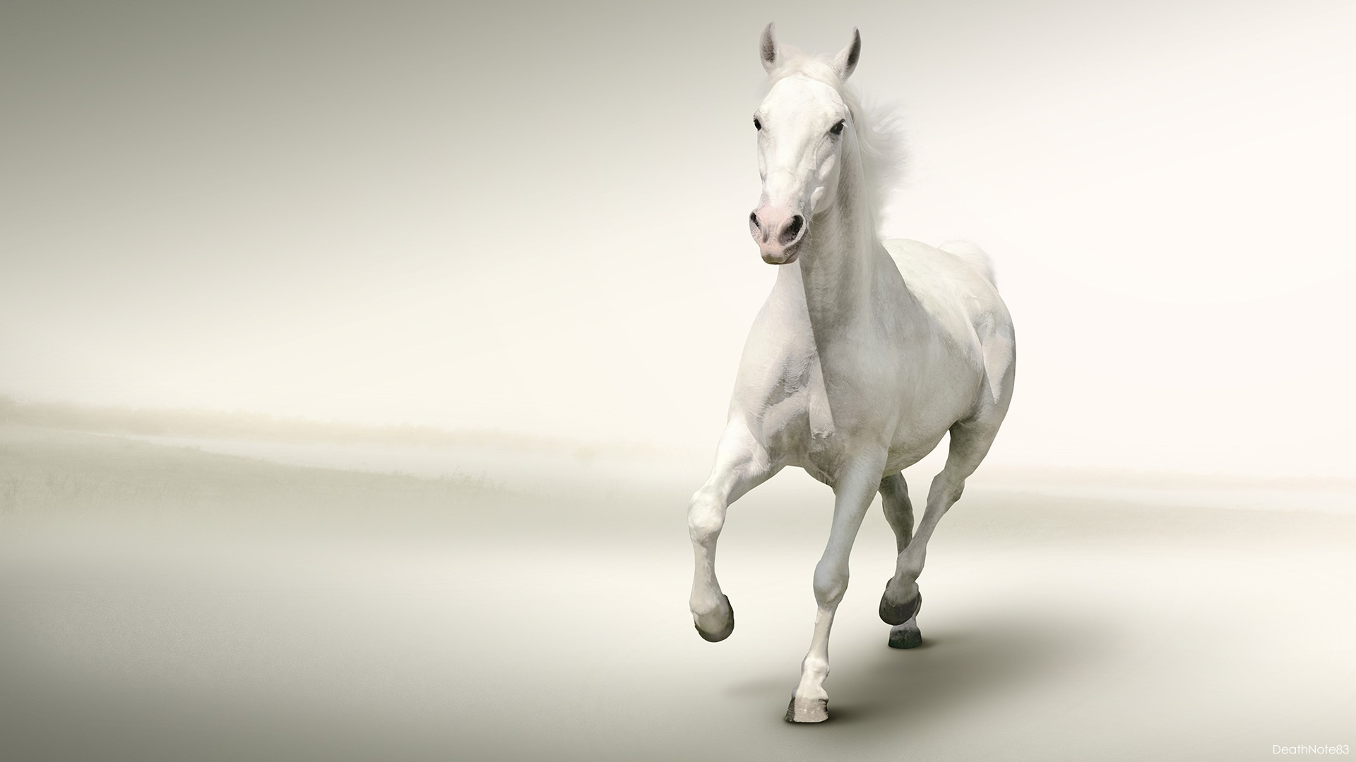 White running horses - photo#25