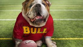 Georgia Bulldogs Mascot Wallpaper