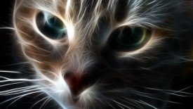 Abstract of Cat Face HD Wallpaper