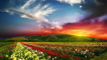 Flower Landscape with Sunset HD Wallpaper