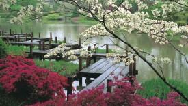 Japanese Garden and Pond HD Wallpaper