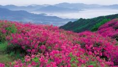 Pink Flower on Mountain HD Wallpaper