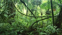 Amazon Rainforest HD Wallpaper