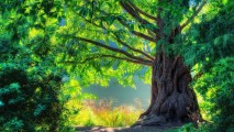 Ancient Tree HD Wallpaper