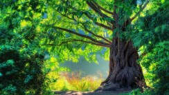 Ancient Tree HD Wallpaper