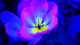 Blue Flower Abstract HD Wallpaper