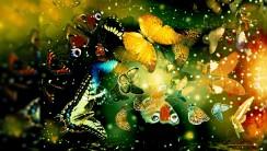 Butterfly World HD Wallpaper