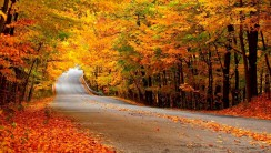 Autumn Roadway HD Wallpaper