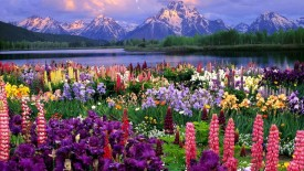 Flowers and Mountains HD Wallpaper