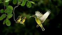 Photo of Mother Bird Feeding Babies HD Wallpaper