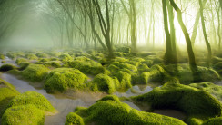 Romania Moss Swamp HD Wallpaper