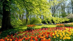 Tulips in the Park HD Wallpaper