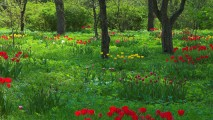 Wild Flowers in the Woods HD Wallpaper
