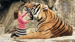 "Say ""aaahhh"" Mr Tiger HD Wallpaper"