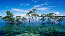 Andaman Islands HD Wallpaper